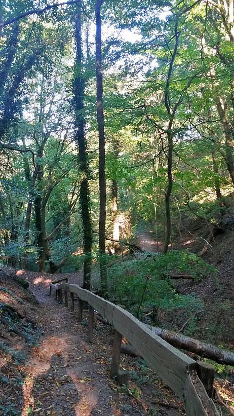 Waldweg vom Kloster nach Heimbach