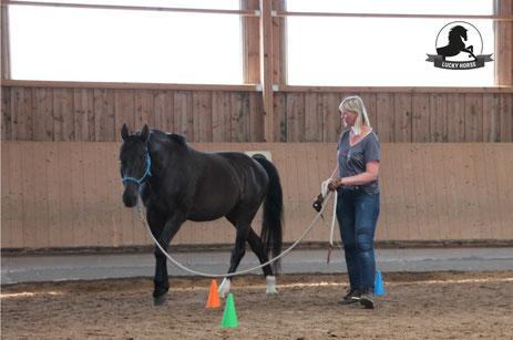 Gelassenheitstraining Pferd Kurs, Lehrgang Bodenarbeit, Knotenhalfter, Horsemanship, Bodenarbeitsseil, Warmblut