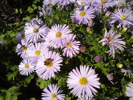 Sommerblumenbeet in Gelb, Rot, Weiß, Violett