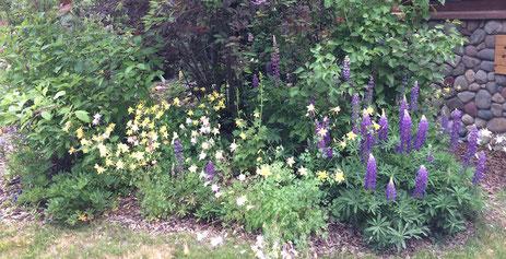 Breckenridge garden maintenance
