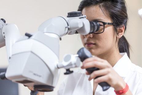 Frau Tsalung an einem Dentalmikroskop
