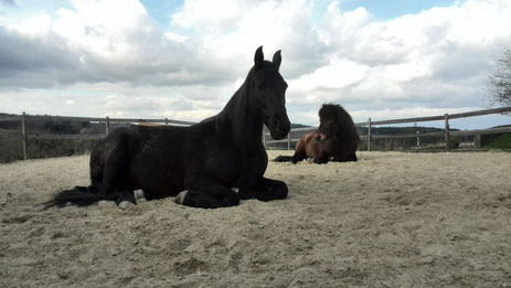 Pferdeakupunktur Kaja Möbius