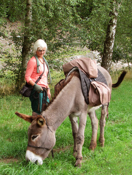 Persönlichkeitstraining und Coaching mit Eseln in Bad Berleburg, Naturpark Sauerland-Rothaargebirge