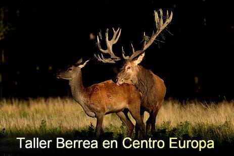 Berrea en Centro Europa