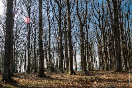 forêt-chêne-merrain-camille-gauthier-merrandier-metier-du-bois