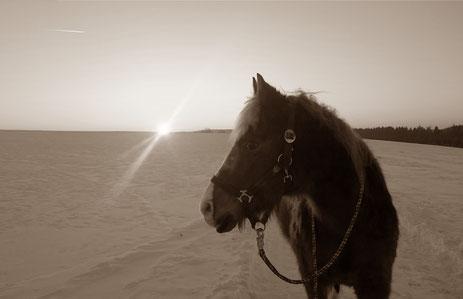 Wenn der Lebensplan durchkreuzt wird / lernen von (alten) Pferden
