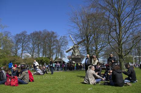 Blick über die Picknickwiese zur Windmühle