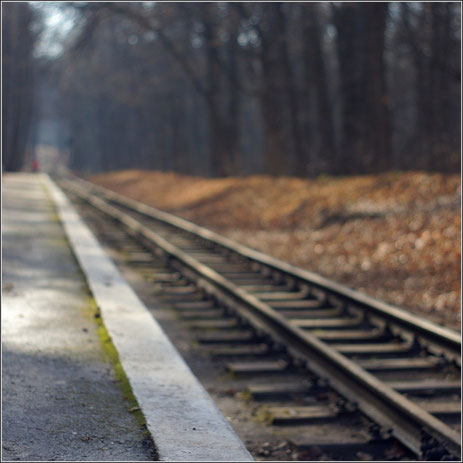 Железная дорога в лесу, уходящая вдаль