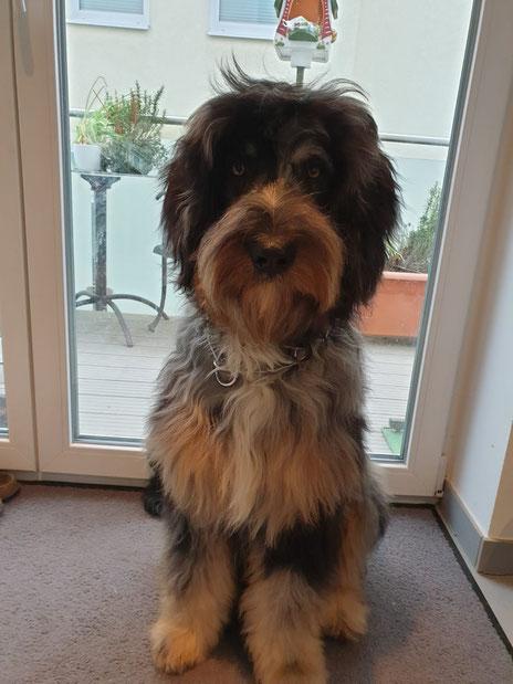 Sully (Sullivan) mit 10 Monaten