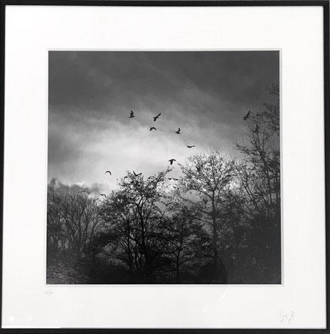 Print 30x30, frame 40x40 cm