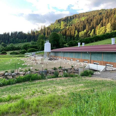 Bio Legehennenstall mit Freilandhaltung, 1km vom Haupthof entfernt