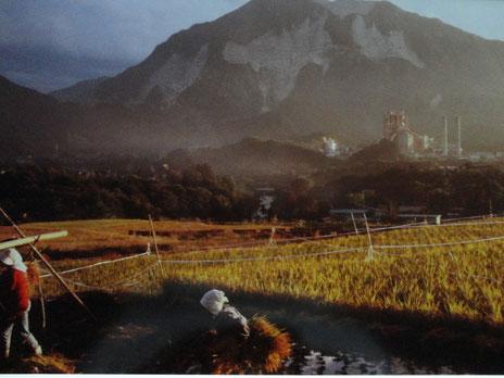 稲刈り・1981年10月23日