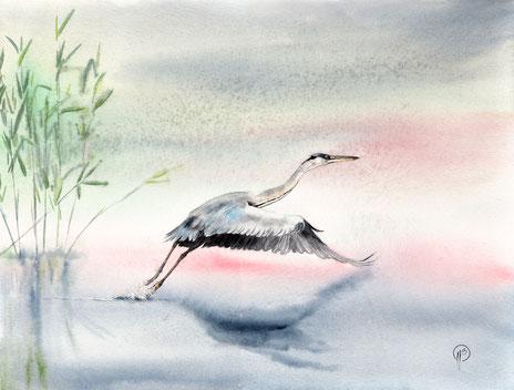 illustration, peinture, animalière, aquarelle,