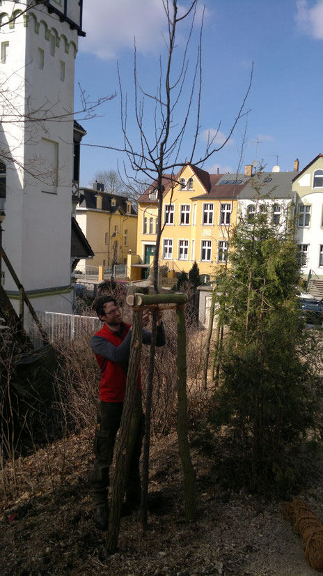 Obstbaumschnitt obstbaumschnitt quellmann - Gartenberatung berlin ...