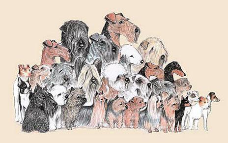 Copyright: Klub für Terrier e.V. von 1894