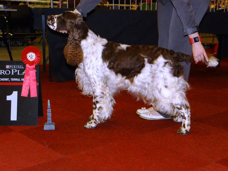 """Deb's Cortina"" is BOS and wins CACIB in Groningen, Netherlands, Photo: Sebastian Feilke"