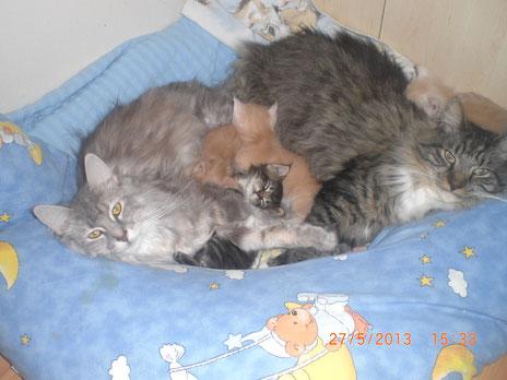 Sissi(links) Snoopy(rechts) er liebt Babys und Sissi akzeptierte es wenn er dazu kam***Sissi's Wurf 2013