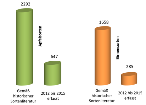 Grafik Apfel- und Birnensorten in Bayern.
