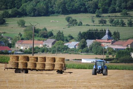 Paysage de Moulins-Saint-Hubert, au nord de la Meuse