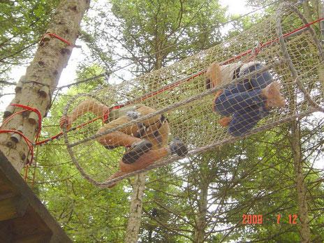 Créé en 2003 au Chambon sur Lignon, le Parcours Aventure de l'Ecureuil est situé au coeur des forêts de la Haute Loire. En juillet et août notre équipe vous accueille tous les jours de 10h à 20h. Nos ateliers et parcours sont adaptés à tous les âges