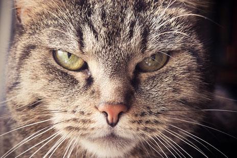 Grumpy Cat als mürrischer skeptischer unzufriedener Kunde