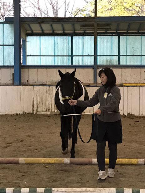 馬がワンドに集中して落ち着いて歩いています