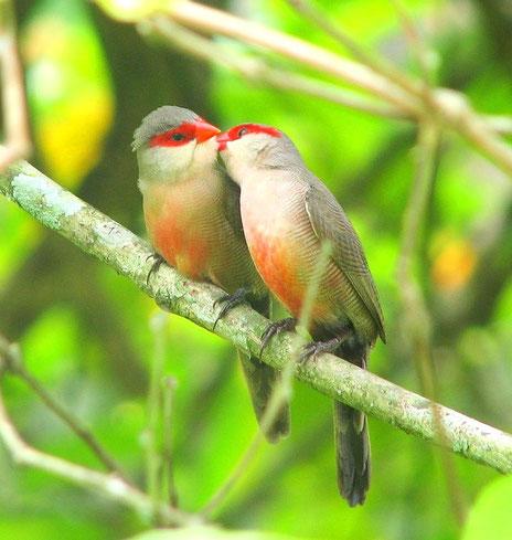 Ein Singvogelpaar drückt aus, dass Nähe über die Körperlichkeit erfahrbar ist; und nur so ist echte Beziehung möglich.
