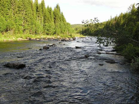 Nea - angeblich der Fluß der großen Bachforellen.