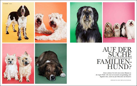 von links oben nach rechts unten: Springer Spaniel, Soft Coated Wheaten Terrier, Wäller (Harald), Havaneser, Cairn Terrier, Wäller (Carlsson)