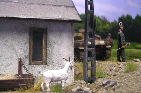 Hinterm Haus beobachtet die Hausziege vorsichtig die Szene.