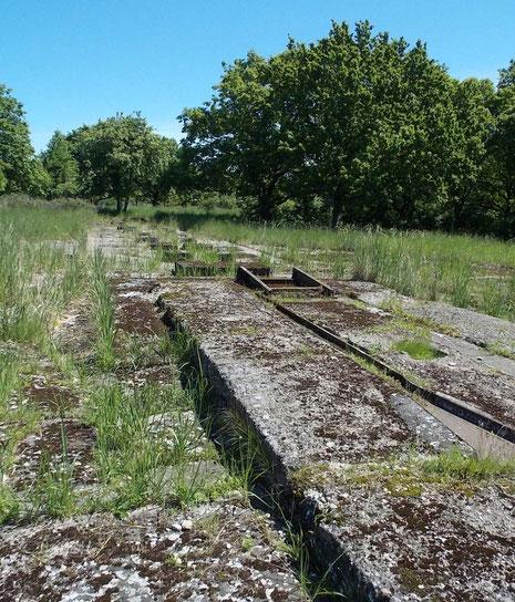 Vor 70 Jahren war das Gelände natürlich baumfrei mit freier Flugbahn aufs Meer hinaus. Die Flugbahnen wurden entlang der Insel Usedom von festen Beobachtungsbunkern verfolgt.