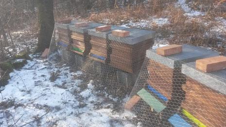 Als Schutz vor dem Grünspecht kommt über die Bienenbeuten im Winter ein Netz, ...