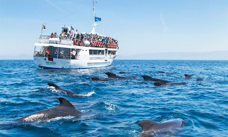 alistamiento de cetáceos en Tarifa
