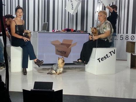 Я с моими девочками побывала в гостях у Надежды Лаптевой в передаче «Все для животных» на канале Тест TV, в прямом эфире немного рассказали о силки терьерах. Спасибо Надежде и всей съемочной команде, за теплый прием и интерес к нашей породе.