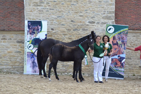 Free Srtyle d'Extra, Championne des foals New-Forest
