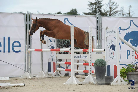French Kiss d'Extra, 3 ans au Sologn Pony