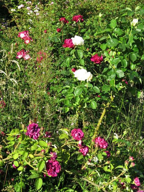 Naturgarten-Rosenschule