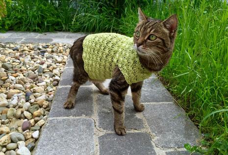 Bild: Katze Ronja mit Pullover im Außengehege