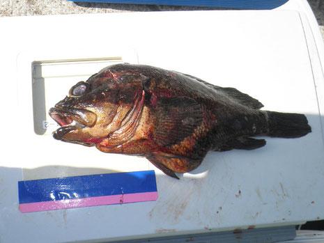 フクシマ権現の津崎さんの大ソイ。ほかにもカゴでハンサコなどでクーラー満タンでした