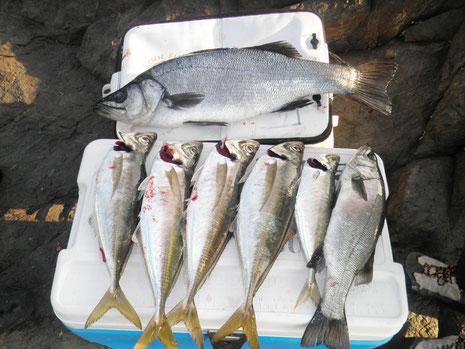 私の釣果。 やっぱ大きい魚がいると釣果が派手でいいですね^^