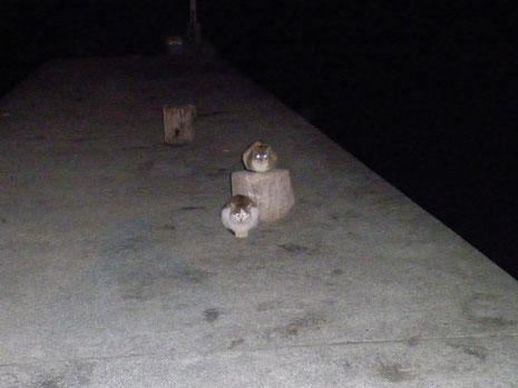 ネコが死んだゼンゴを狙ってます