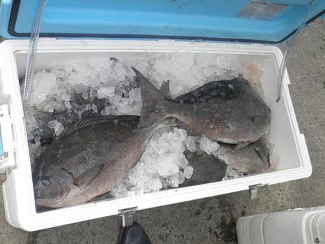 クーラー2個満タン。ド派手な釣果です