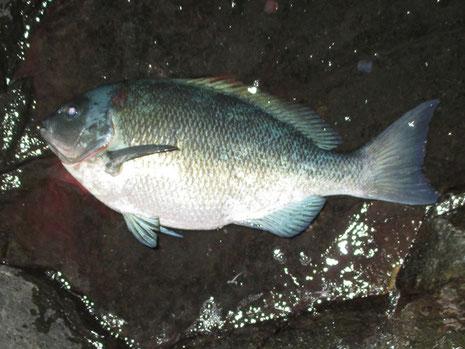 男女初魚は腹パンの40地グロ。