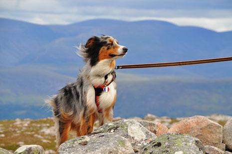 road trip ecosse, roadtrip scotland, highlands, chien, vacances, voyager avec son chien