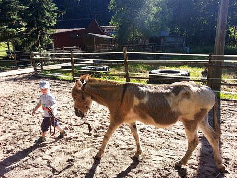 Esel-Therapie: Tiergestützte Interventionen mit Eseln in Bad Berleburg, Naturpark Sauerland-Rothaargebirge