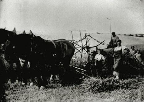 Ernte in den 1930er Jahren, Foto: Nachlass Benno von Heynitz