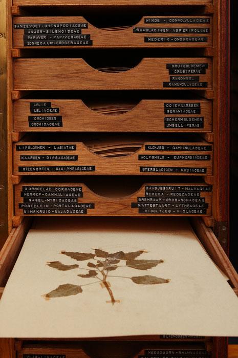 Herbariumkabinetje Jan Sloots