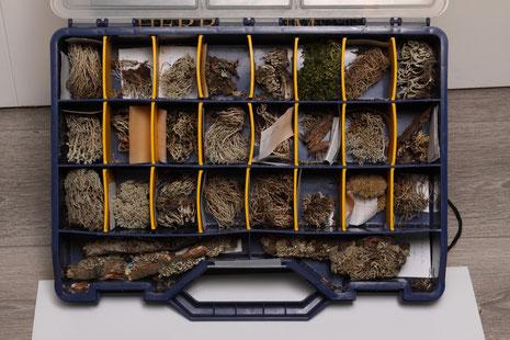 Korstmossencollectie Jan Engelen   collectie herbarium frisicum