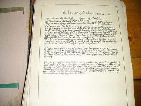 Joodsherbarium 1940-1943  Prachtige gekalligraveerde beschrijving per herbariumvel!