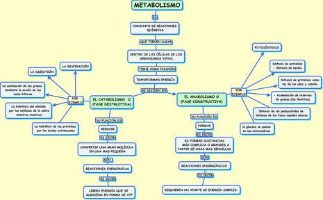 MAPA DE METABOLISMO
